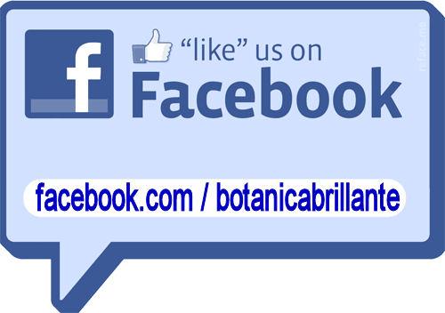 2012/facebook-sticker.jpg